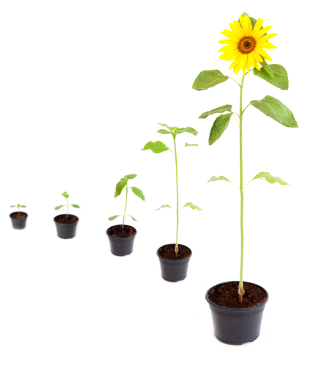 Moving to a new RMIS? Consider one that can grow with you